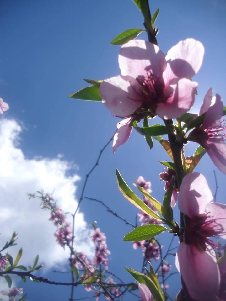 fiore_primavera2