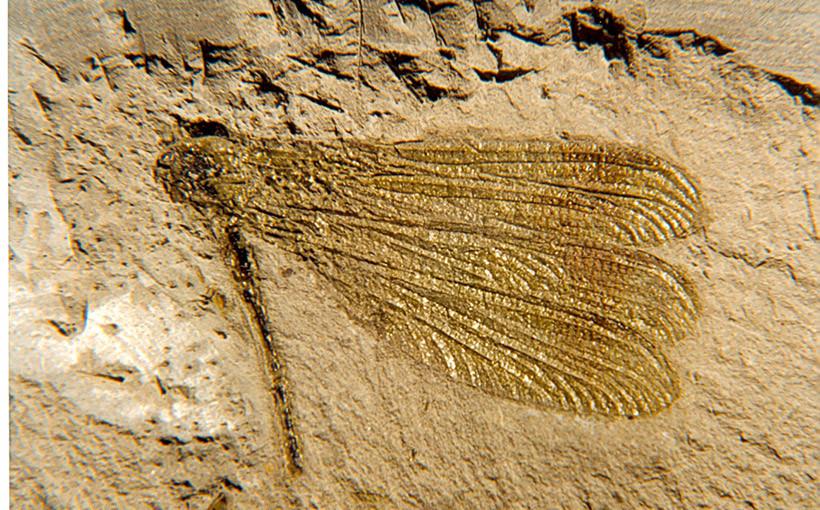 giacimenti_fossili