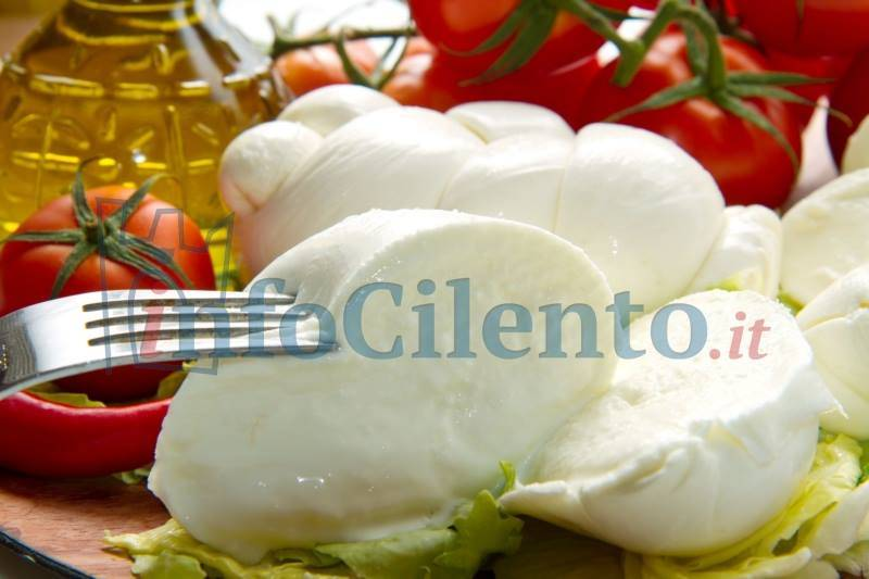 Photo of La mozzarella di bufala campana protagonista al Cibus