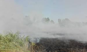 incendio_videiterzi