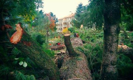 alberi_spes