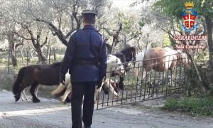 recupero-pony
