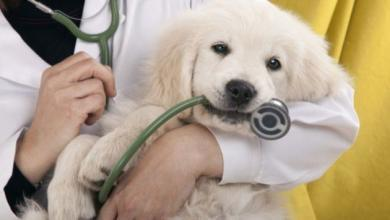 Photo of In Campania arriva il '118 veterinario'