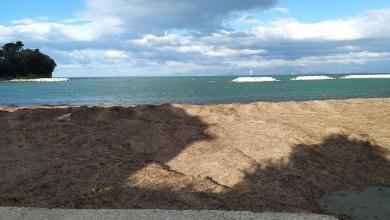 Photo of Agropoli, spiagge invase da posidonia: allarme in vista dell'estate
