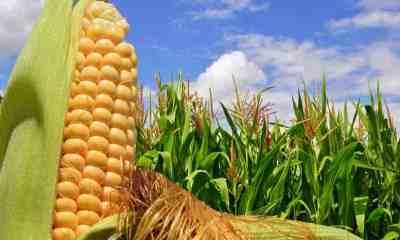seguridad alimentaria de Bolivia