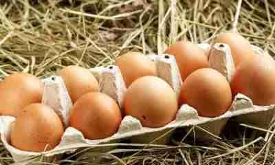 Día_del_huevo