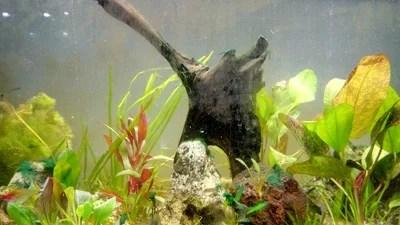 Les aquariums et les algues