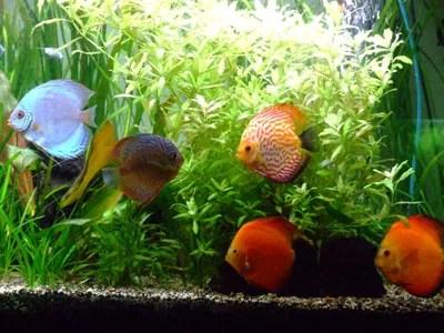 Aquarium sans algues