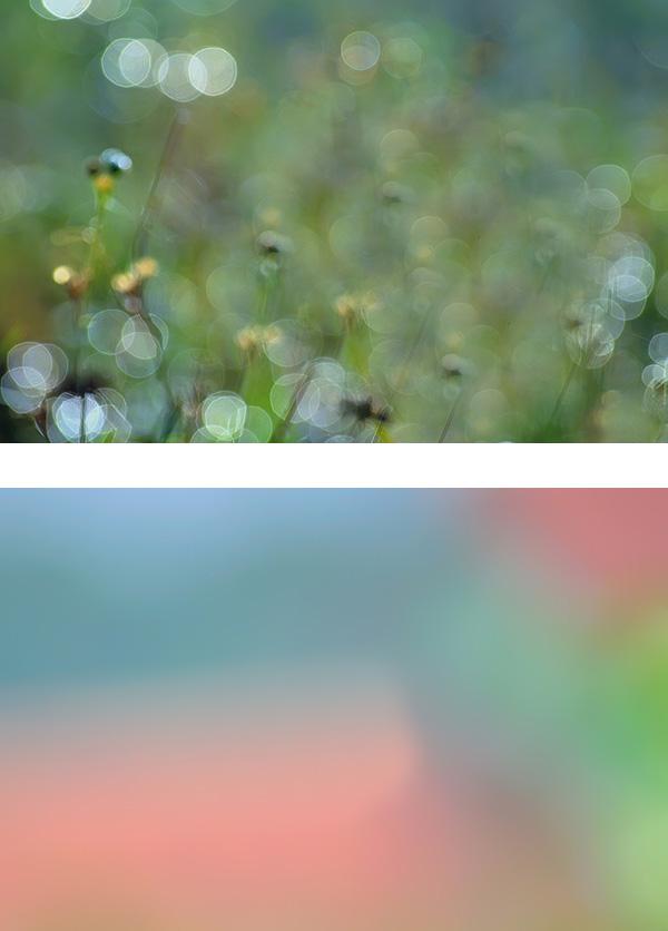 Dua foto diatas bisa dijadikan digabungkan dengan foto makro untuk membuat latar belakang baru yang lebih menarik