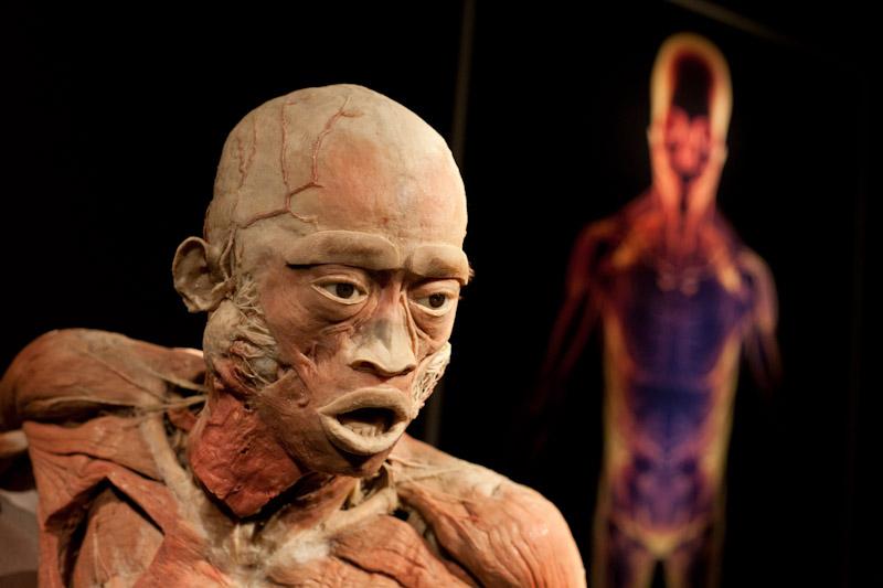 The Human Body Exhibition : Kontrowersyjna wystawa ludzkich ciał dotarła do Krakowa [ zdjęcia ]