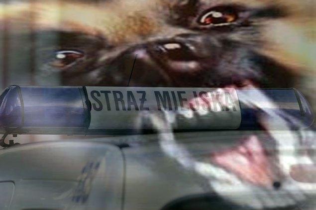Pies_Straż