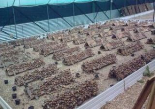 How To Make Money From Snail Farming in Nigeria