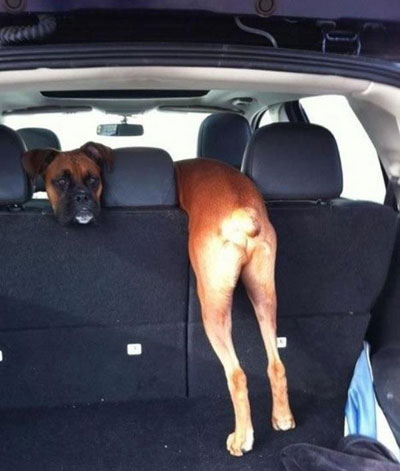 right-angle-picture-dog-double