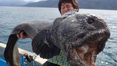 poisson bizarre insolite fukushima
