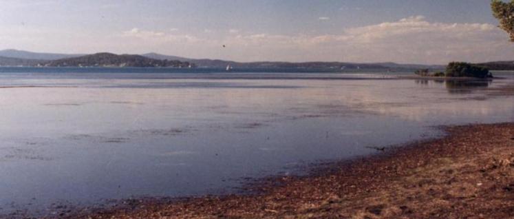 PHOTO Une affreuse créature retrouvée au bord d'un lac australien