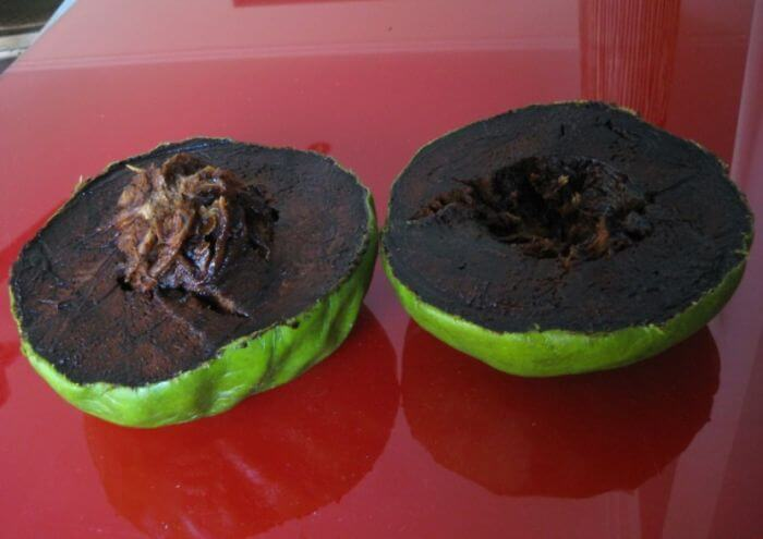 fruits-legumes-etranges-25