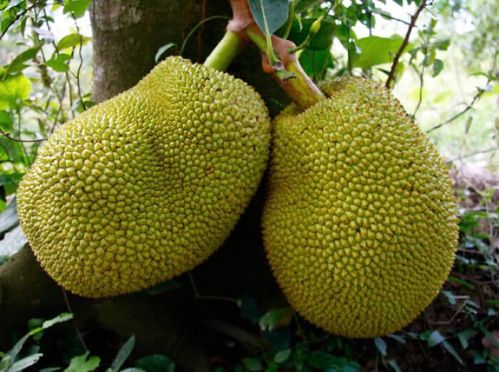 fruits-legumes-etranges-8
