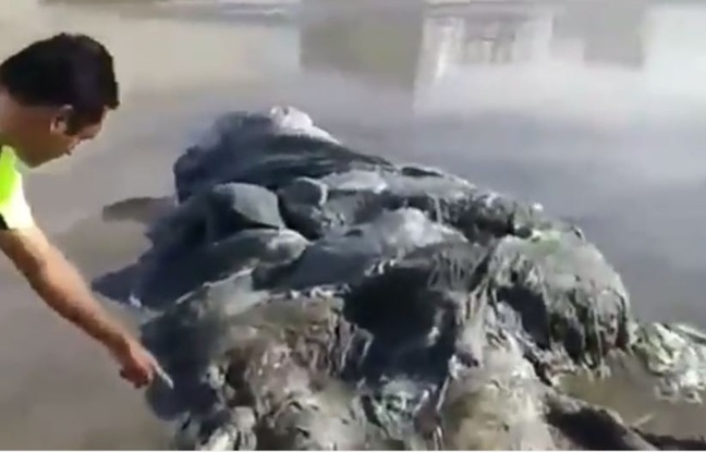 montre creature acapulco mexique