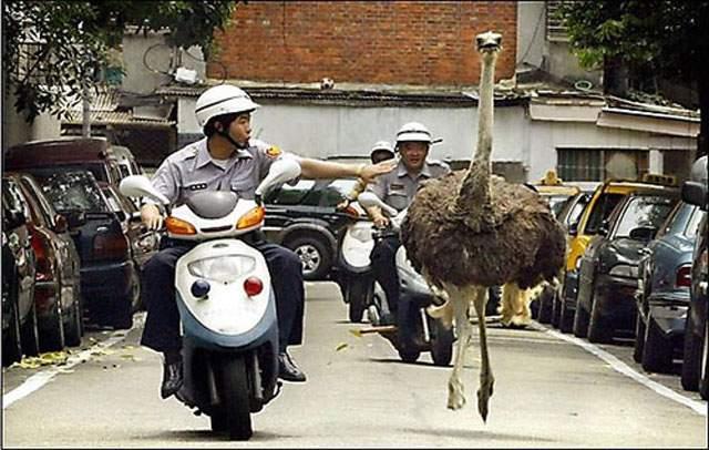 cop-and-ostrich