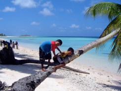 Children become extremely adept at climbing trees. This one on Aur Atoll is the 'beginner's slope'. Photo: David Mancini
