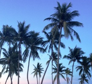 Palm trees at sunset in Majuro. Photo: Karen Earnshaw