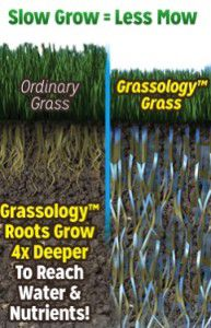 Slow Grow Grass Seed