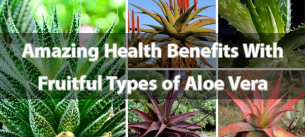 Amazing Health Benefits With Fruitful Types of Aloe Vera