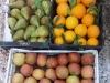 frutta-e-verdura-di-vincenzo-cicala
