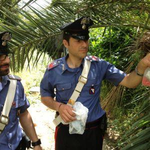 Caivano, Parco Verde; palma utilizzata come nascondiglio per stupefacenti.