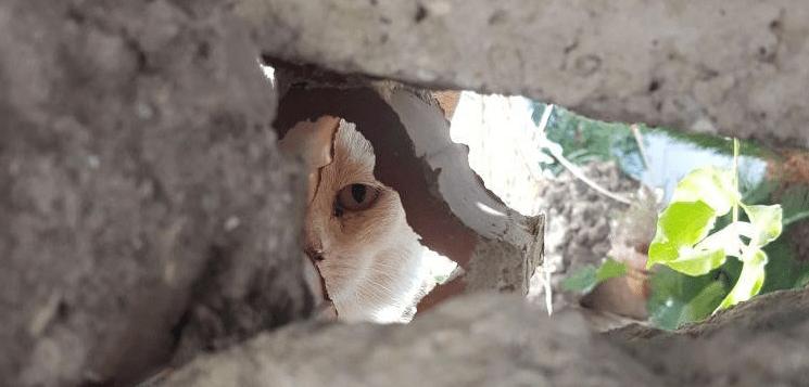 Ischia, dopo il terremoto aumenta il randagismo. Almo Nature dona 6000 pasti