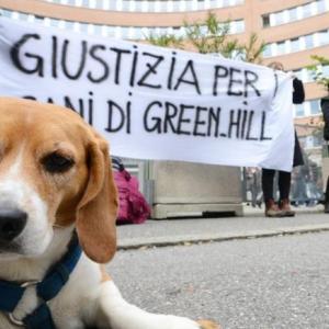 """Processo """"Green Hill bis. Tribunale di Brescia assolve due veterinari e dipendenti dell'allevamento. LAV: impugneremo la sentenza"""