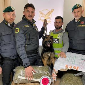 Quattro chili di marijuana da Porto Cesario a Teverola con corriere espresso. Arrestato il mittente
