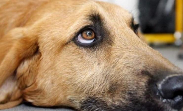 Litiga con i genitori e uccide il cane lanciandolo dal balcone