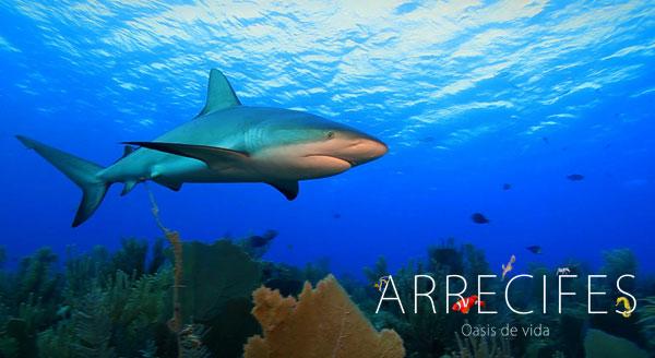 arrecifes_tiburon