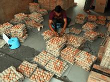 bisnis-telur-ayam