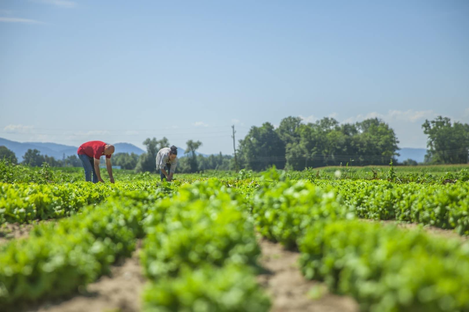 Convocadas oposiciones al cuerpo de ingenieros agrónomos del estado