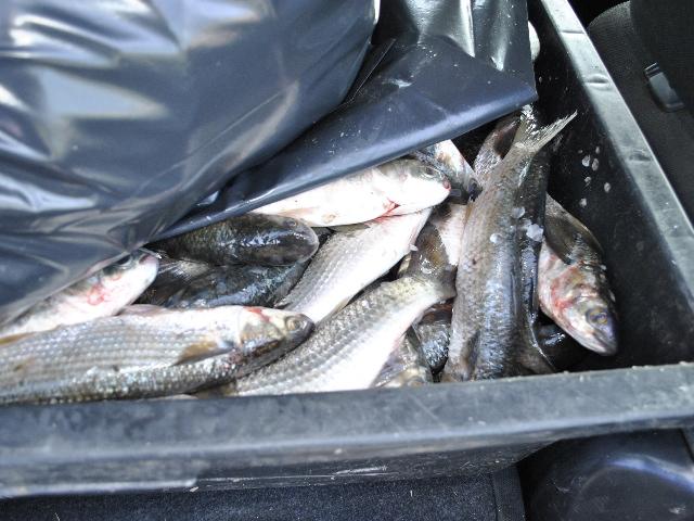 Transport ilegal de peşte şi deţinere de unelte de pescuit interzise de lege