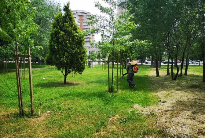 Primăria Municipiului Constanța a început acțiunile de dezinsecție