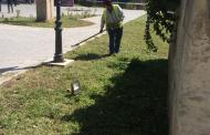 Lucrări de igienizare şi cosit în cartierele din Constanța