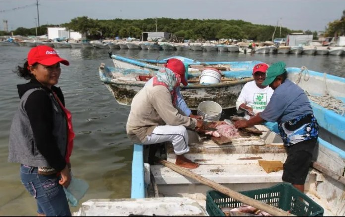 Yucatan contributes 67.5 percent of octopus catch across the country.  NTX / FILE