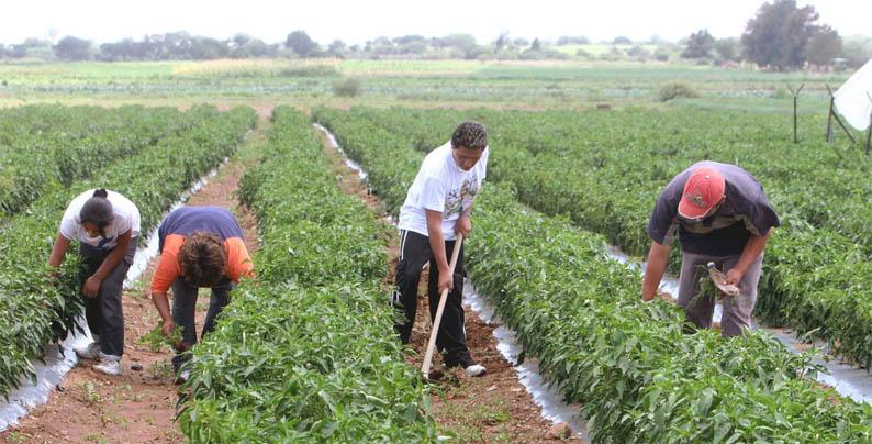 sector agropecuario