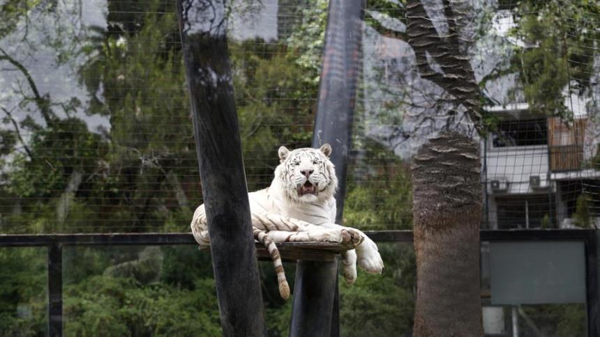ecoparque-en-el-zoo-de-buenos-aires-2114003h540