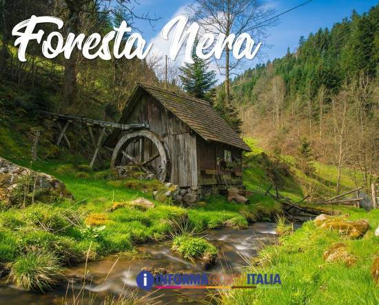 To connect with la foresta nera, log in or create an account. La Foresta Nera