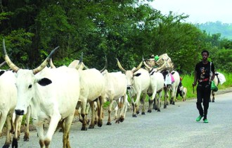 Image result for cattle rustlers in nigeria