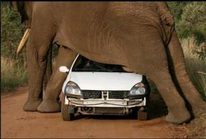 elephant-crush