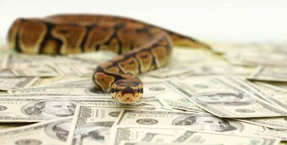 Buzzing Today: Owner of 'Mysterious snake' Who Swallowed N36M From JAMB Confesses