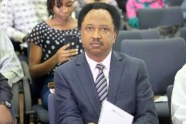 Ahead of 2023??? Propangada against Tinubu already started in the North - Shehu Sani