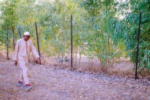 D0ME4QPX4AAphmn - #Nigeria Decides: President Buhari Takes to Farming