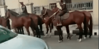 Lagosians resort to horses after okada ban