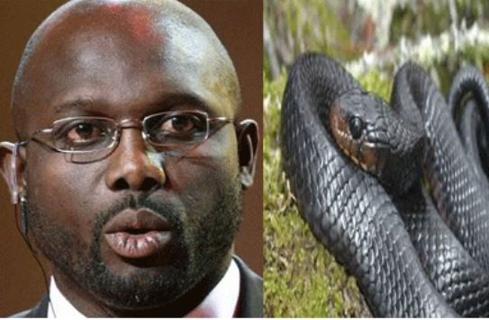 BREAKING: Liberian presidents forced out of office by snakes